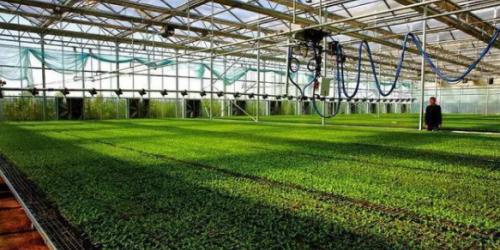 实现农业经济规模化后,如何提升生产的经济效益?