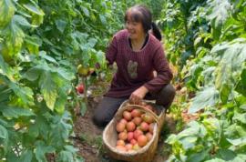 """帮蔬菜""""撑伞"""",让农民获利!保康推广这项栽培技术提升产业效益"""