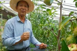 """山西临猗:""""枣王""""老李10年深入研究,创造枣树管理技术奇迹"""