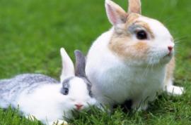 农业养殖:养兔场,兔舍的注意事项