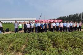"""良种良法直达种植大户!助力青岛农业丰收,专家组团""""地头教学"""""""