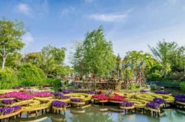 """4万m²沉浸式互动体验,上海家庭园艺展——""""爱花 ..."""