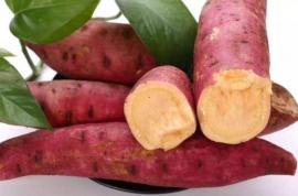 利用科学技术,红薯高产栽培,提高农户收益
