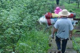 花椒高产栽培及病虫害防治技术