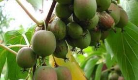辽宁小伙承包30亩地种果树:发展农业经济,也不失为创业的好选择