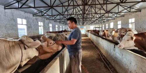 河南12个县试点政策性担保助农半年首批2918家农户已收到贷款贴息