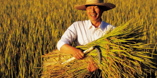 当前农村经济的发展现状及主要问题