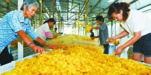 农业高质高效乡村宜居宜业