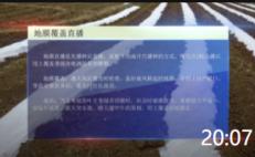 20:07 糯玉米种植技术——忻城县力丰农业种植科技有限公司