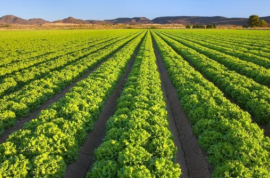 沙漠地区农业种植技术浅谈,一起来了解了解!